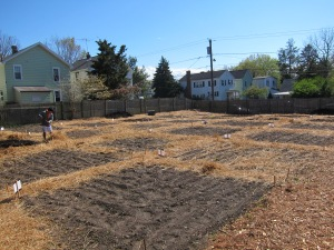 The garden area, ready for planting: a 4 x 6 grid of plots, so space for 24. My plot: center bottom here.